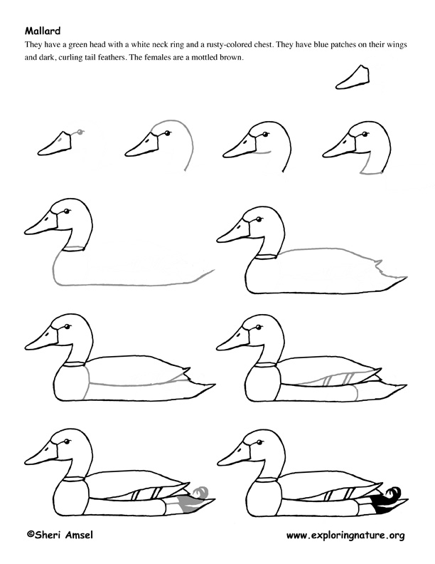 how to draw step by step how to draw a dinosaur step by step pictures cool2bkids draw step how step to by