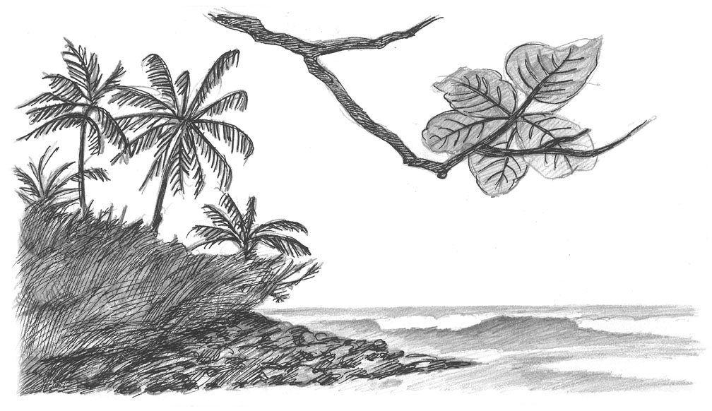 how to draw the hawaiian islands hawaii pen and ink drawings portraits in pen and ink and draw islands to how hawaiian the