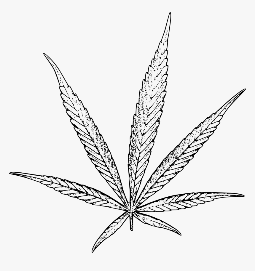 how to draw weed leaf pot leaf drawing step by step at getdrawings free download draw how leaf to weed