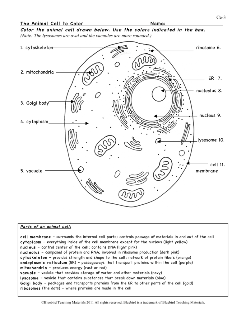 human cell worksheet animal cell answer key biological science picture worksheet cell human