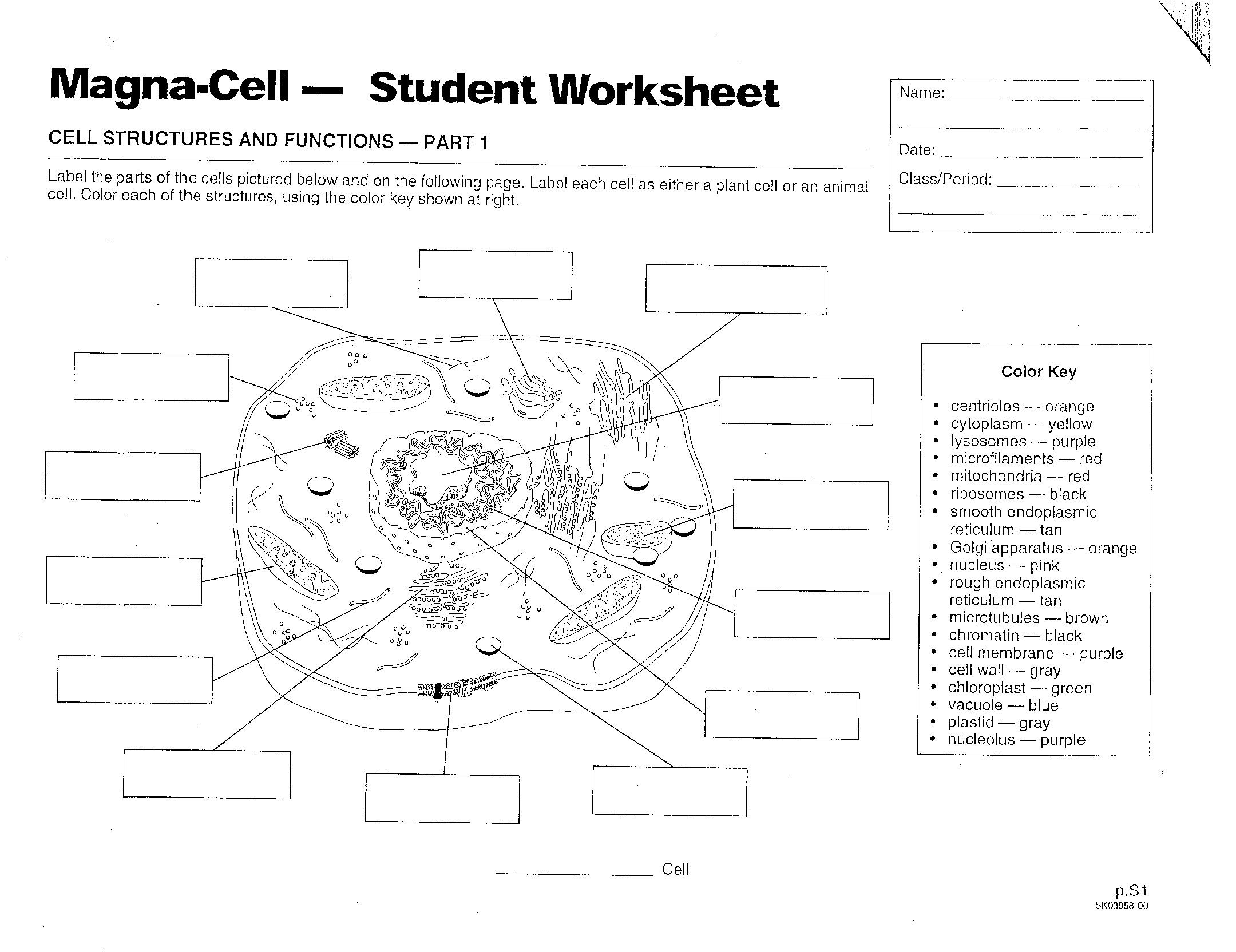 human cell worksheet human cell diagram worksheet photo album diagrams human worksheet cell