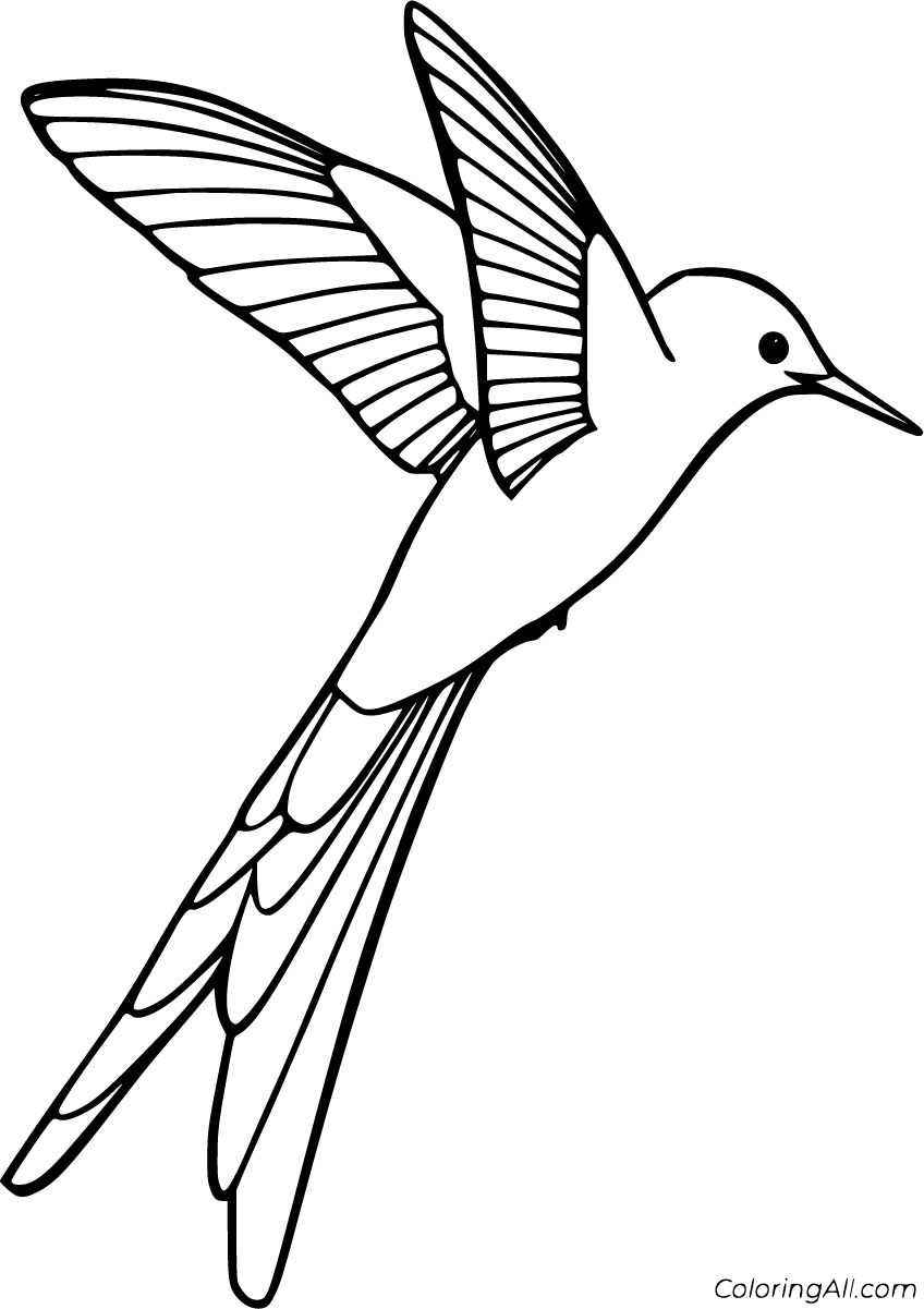hummingbird coloring pictures 32 free printable hummingbird coloring pages in vector coloring hummingbird pictures