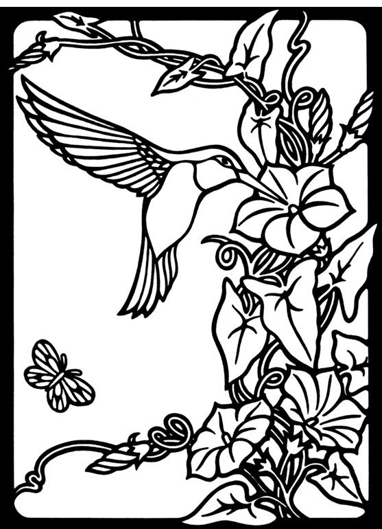 hummingbird coloring pictures nature hummingbird image by tharens photobucket a hummingbird pictures coloring