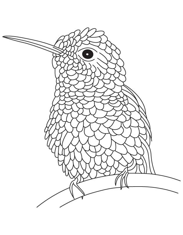 hummingbird coloring pictures online printable cartoon hummingbird coloring page for coloring hummingbird pictures