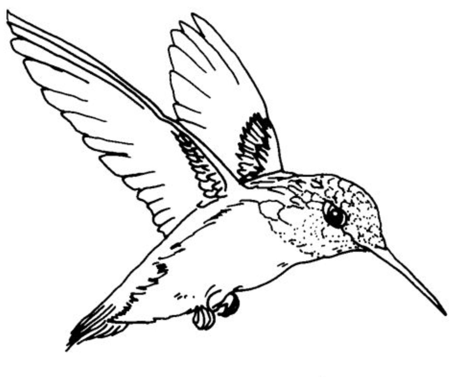 hummingbird coloring pictures pin by alia on creative art crafts bird coloring pages pictures coloring hummingbird