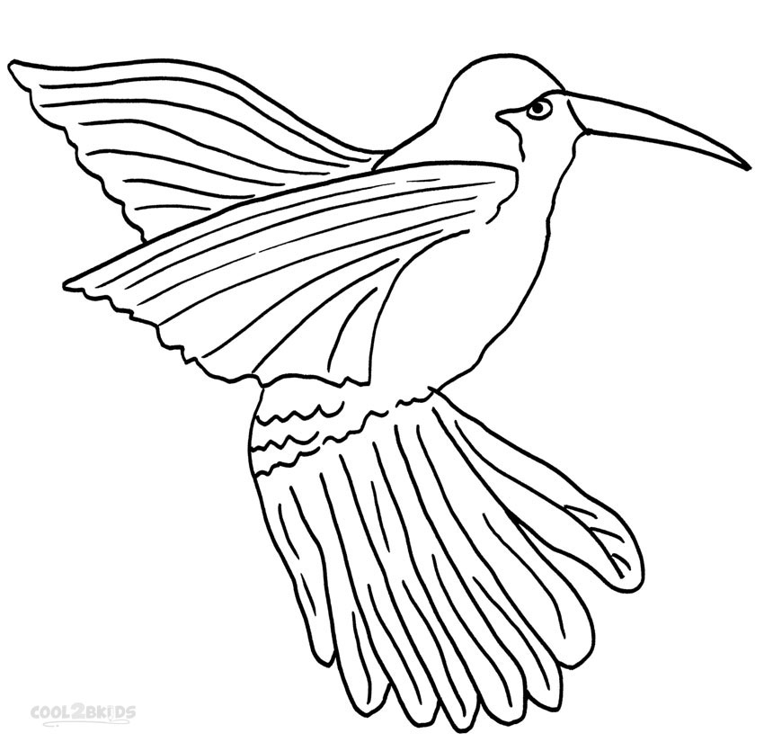 hummingbird coloring pictures printable hummingbird coloring pages for kids cool2bkids coloring hummingbird pictures