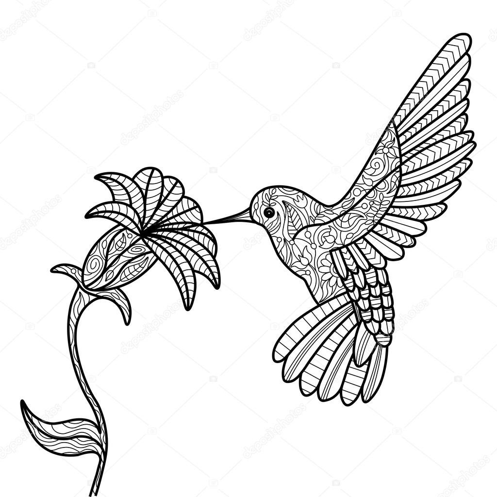 hummingbird pictures to color free printable hummingbird coloring pages for kids pictures to hummingbird color