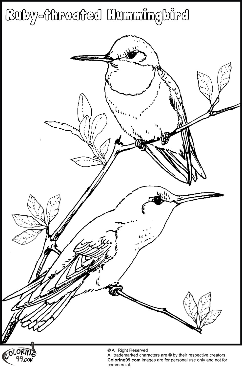 hummingbird pictures to color get this free hummingbird coloring pages 34753 pictures color hummingbird to