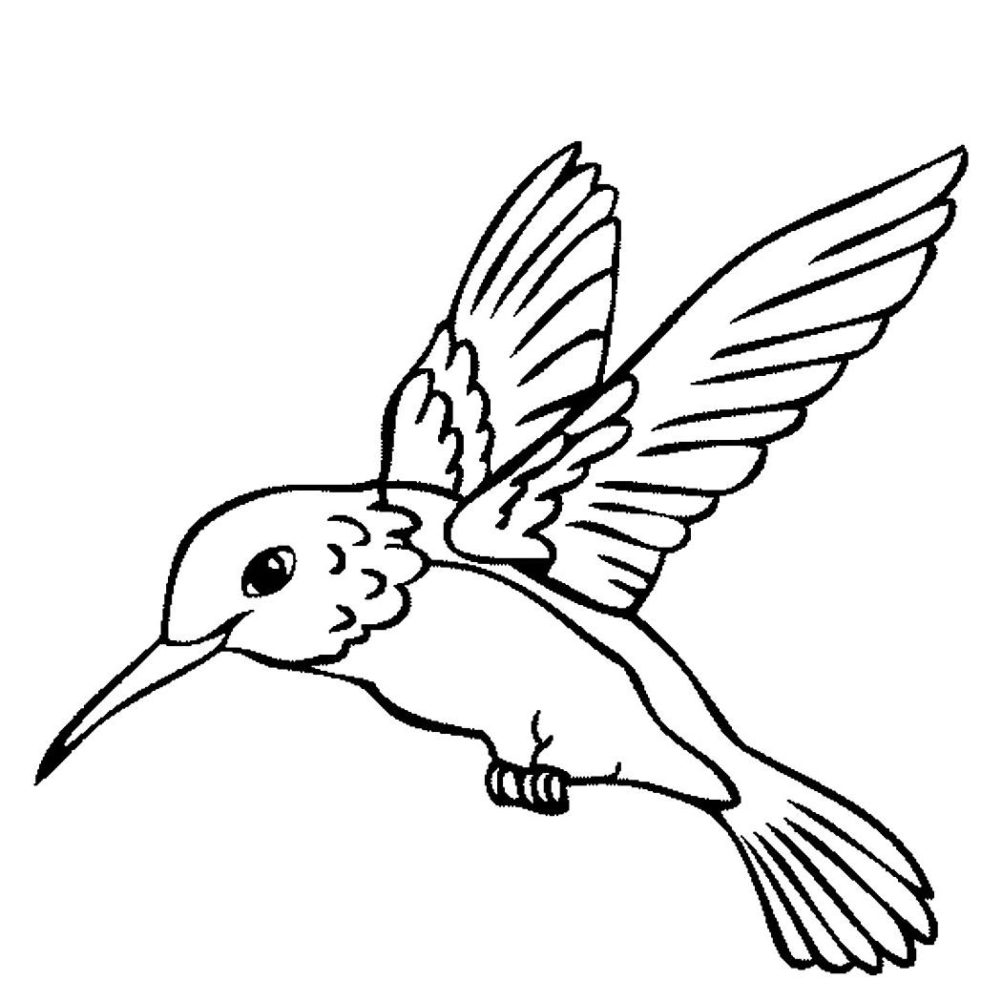 hummingbird pictures to color hummingbird coloring page coloring home pictures hummingbird color to