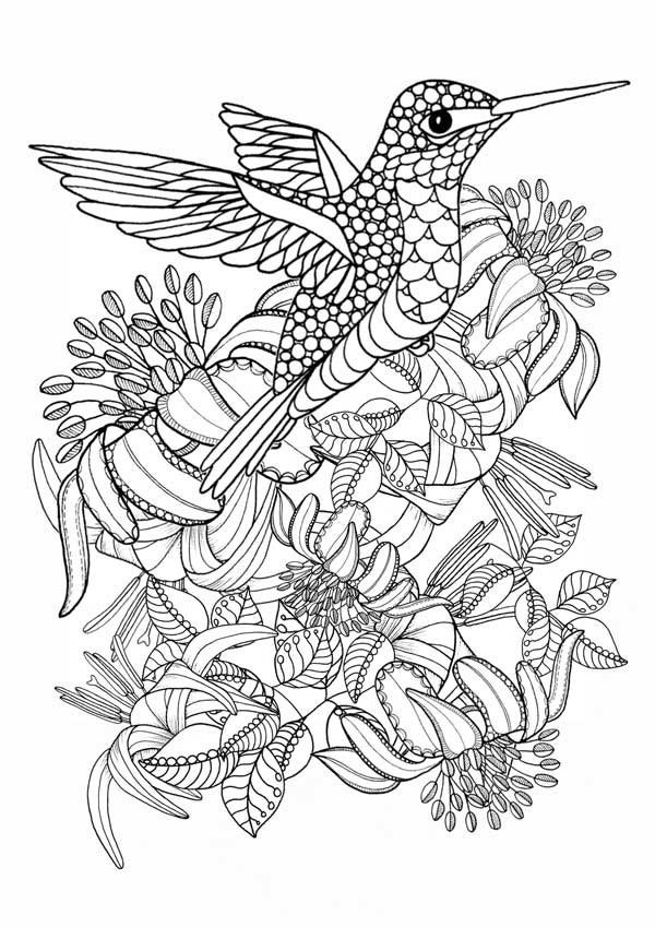 hummingbird pictures to color hummingbird coloring pages to download and print for free to pictures hummingbird color