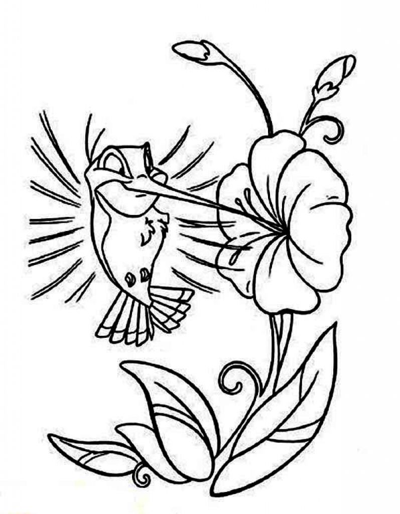 hummingbird pictures to color hummingbird coloring pages with images bird coloring hummingbird color pictures to