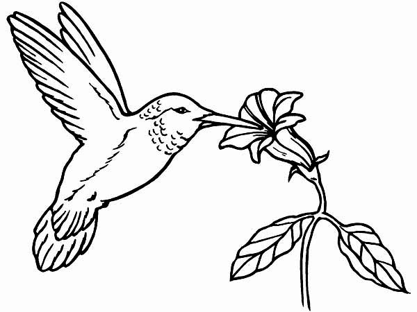hummingbird pictures to color hummingbird printable coloring pages digital download of pictures to hummingbird color
