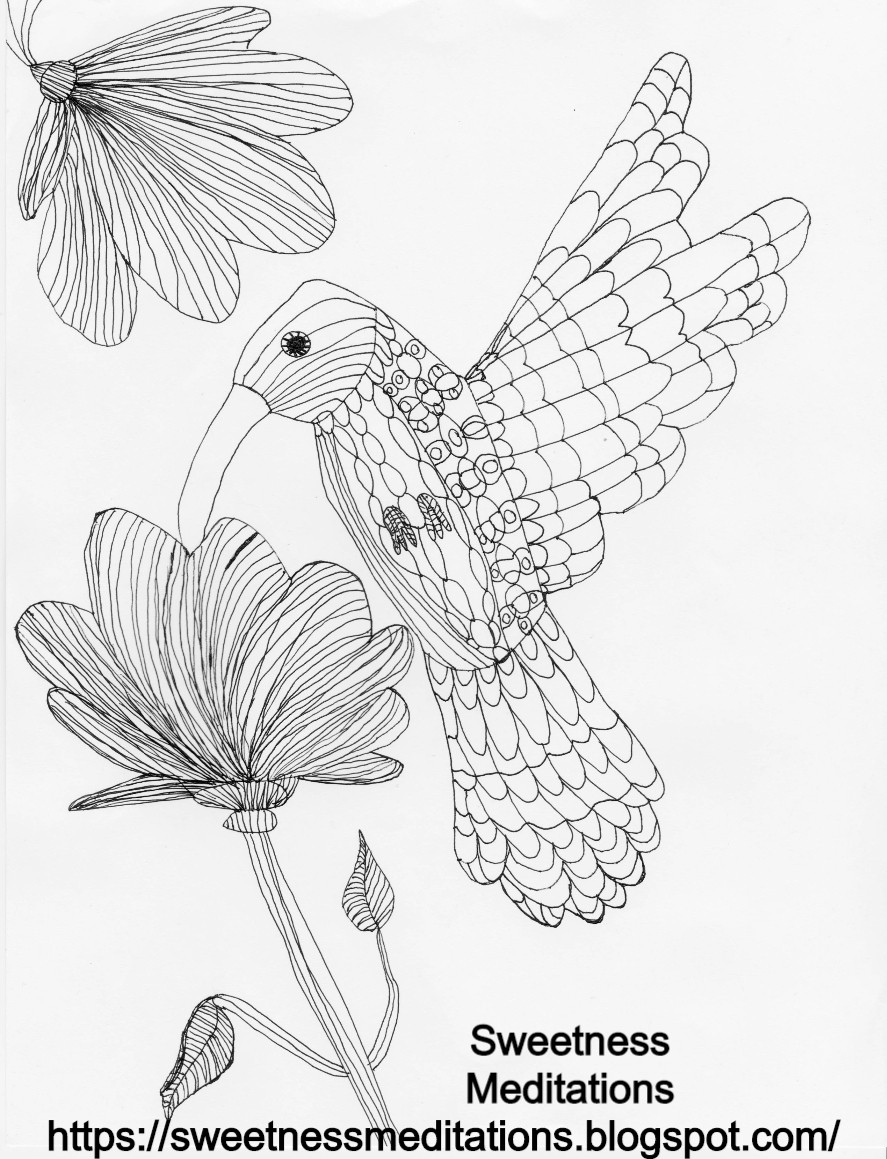 hummingbird pictures to color top 10 hummingbird coloring pages for your toddler bird color to pictures hummingbird