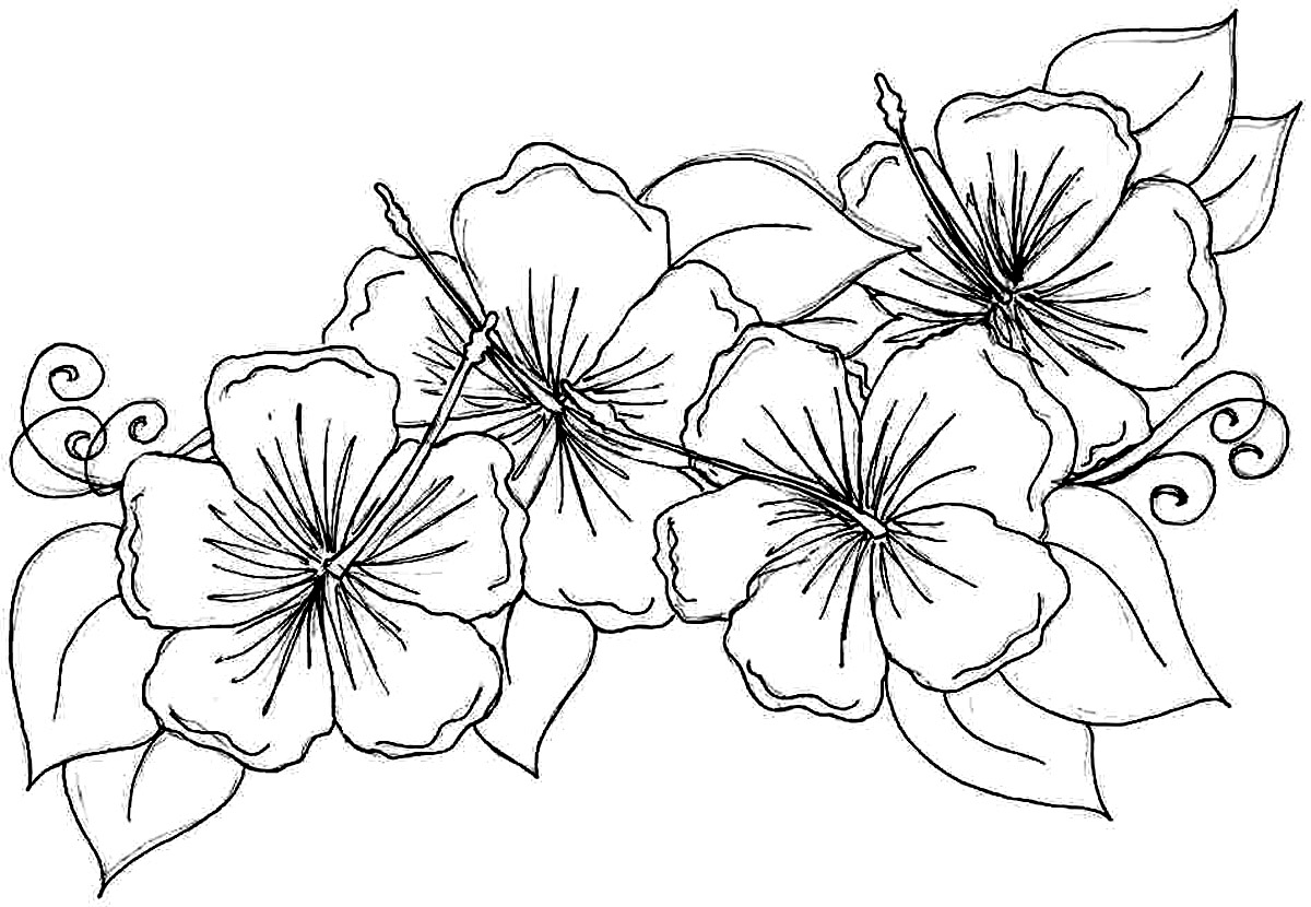 images of flowers to color free printable hibiscus coloring pages for kids to images color flowers of