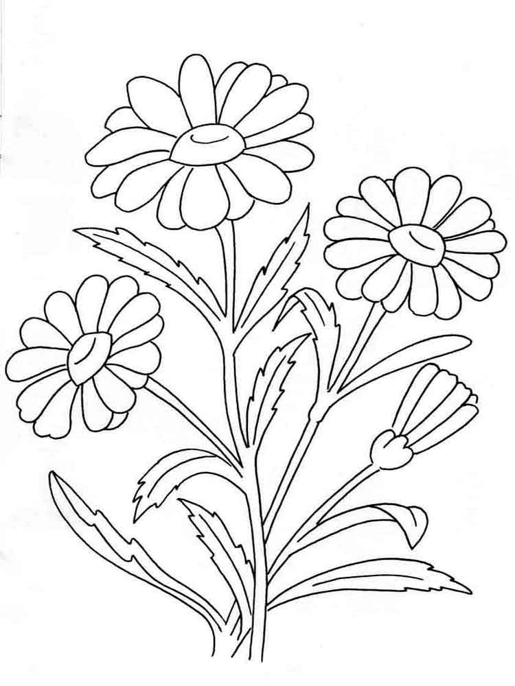 images of flowers to color sunflower coloring pages to download and print for free to of color images flowers