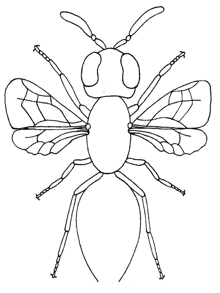 insect coloring pictures realistic insect coloring pages at getdrawings free download coloring insect pictures
