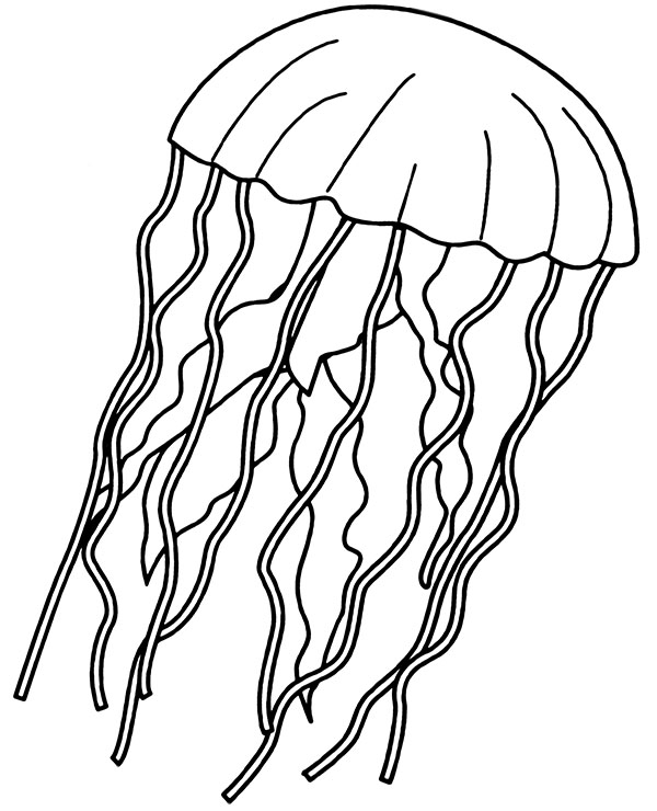 jellyfish coloring jellyfish coloring page for children medusa printable image jellyfish coloring