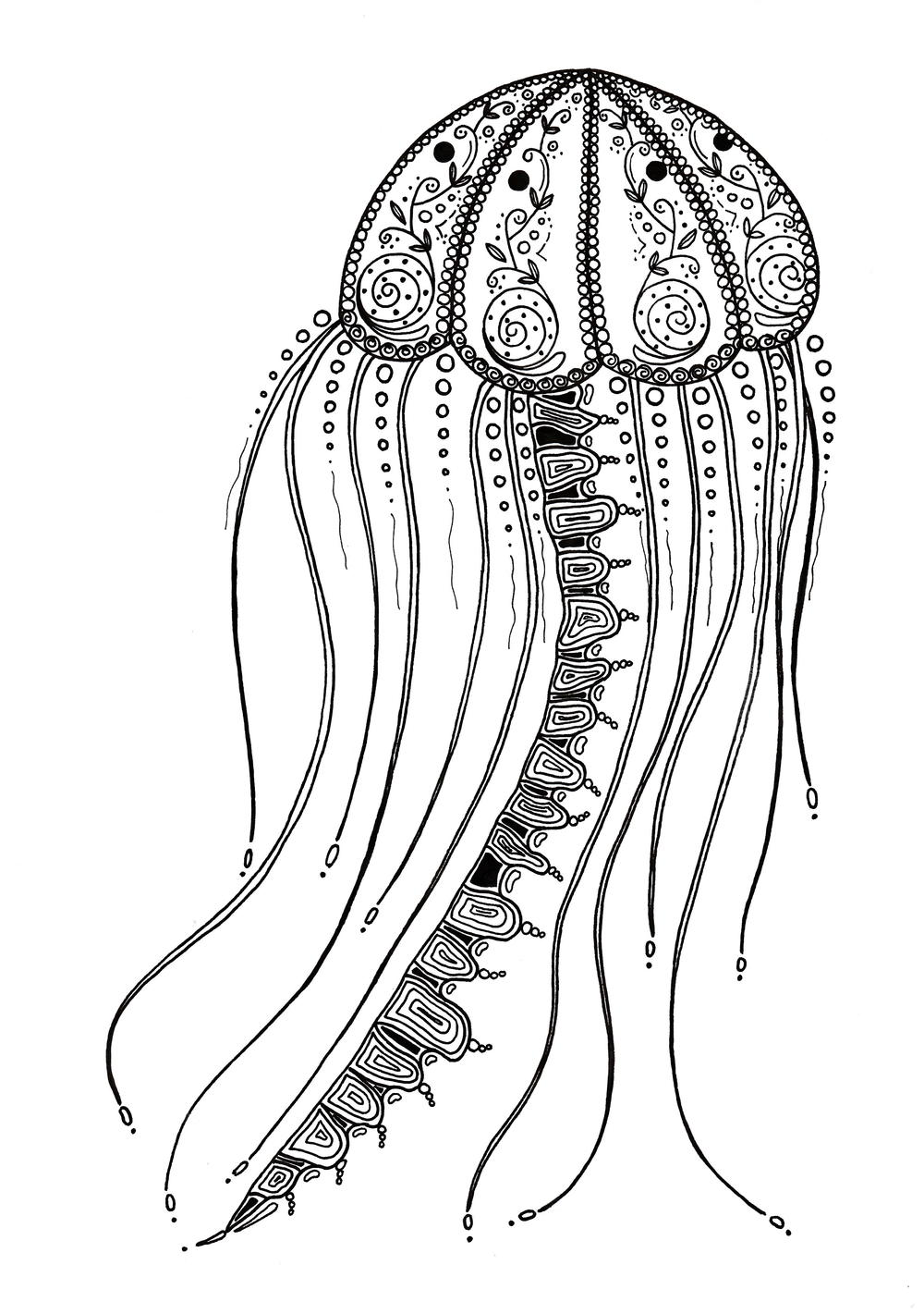 jellyfish coloring jellyfish coloring page free download on clipartmag jellyfish coloring