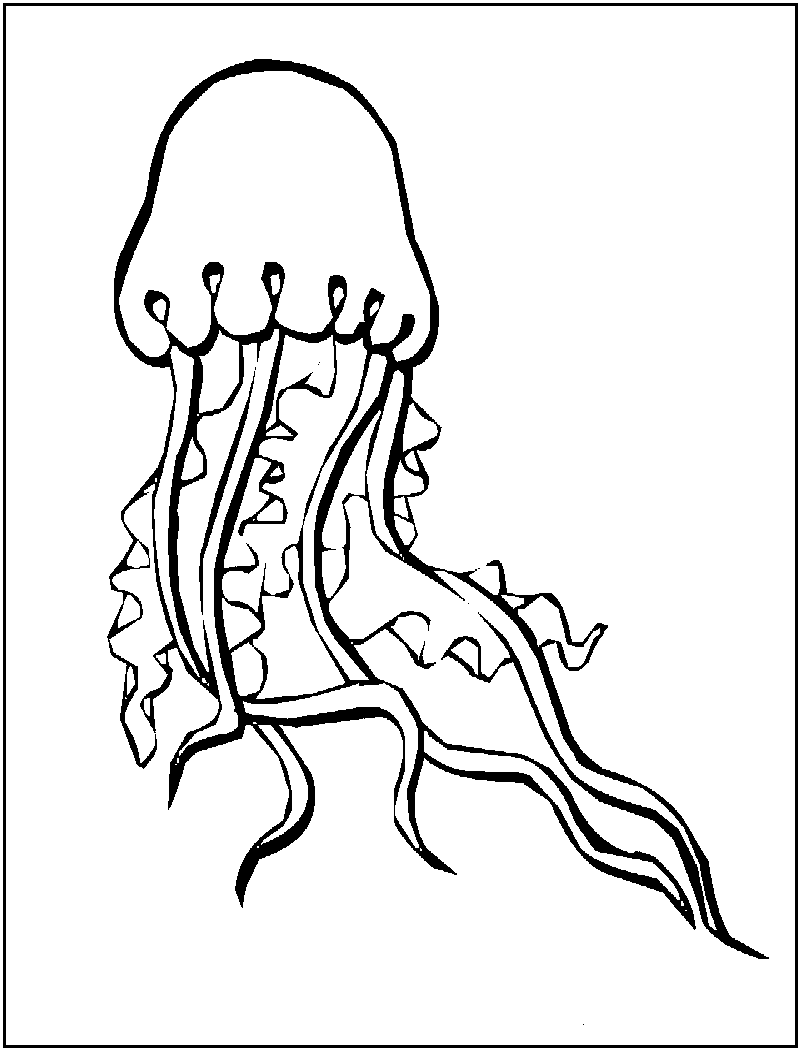 jellyfish coloring pages scyphozoa jellyfish coloring page download print jellyfish coloring pages