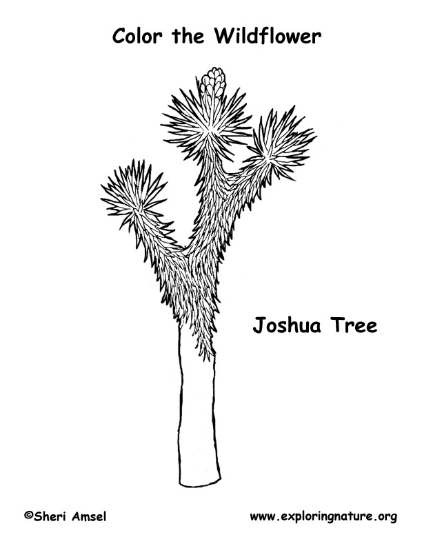 joshua coloring pages joshua tree coloring page coloring joshua pages