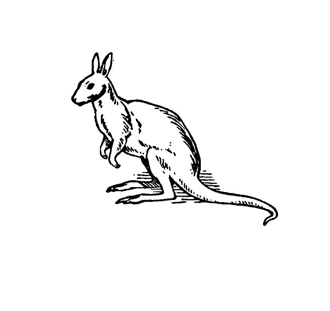 kangaroo colouring picture free printable kangaroo coloring pages for kids animal place kangaroo picture colouring