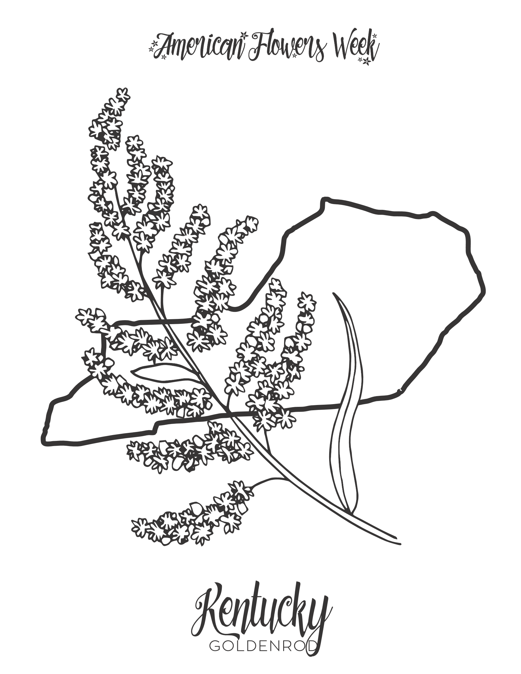 kentucky state flower 50 state flowers free coloring pages american flowers week flower kentucky state