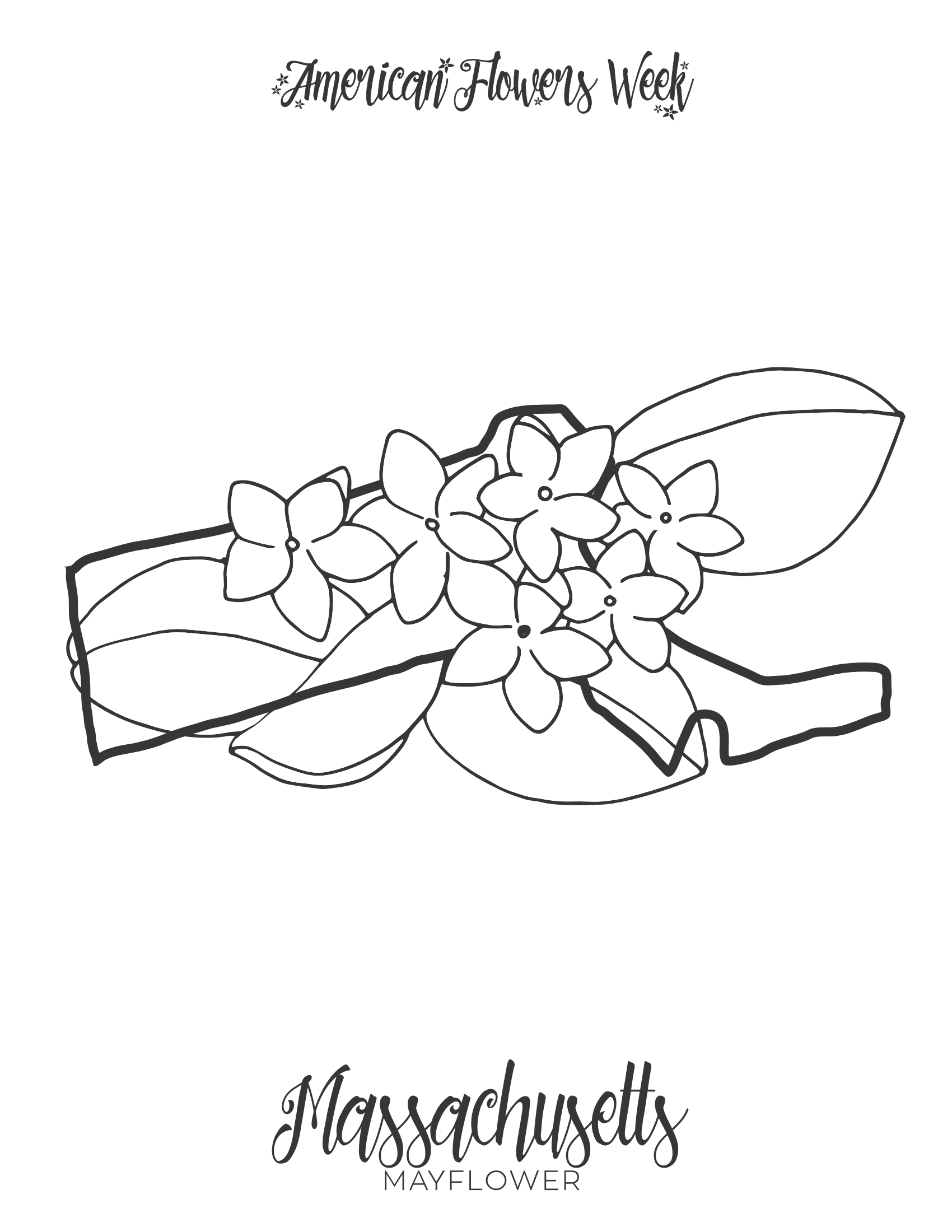 kentucky state flower 50 state flowers free coloring pages american flowers week kentucky flower state