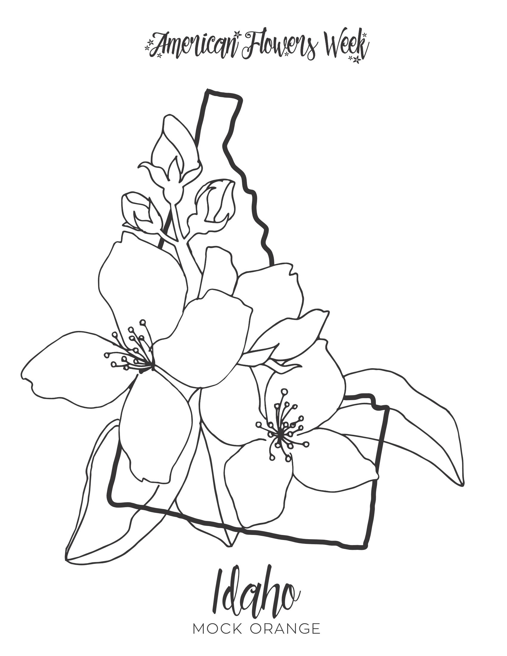 kentucky state flower 50 state flowers free coloring pages american flowers week kentucky state flower