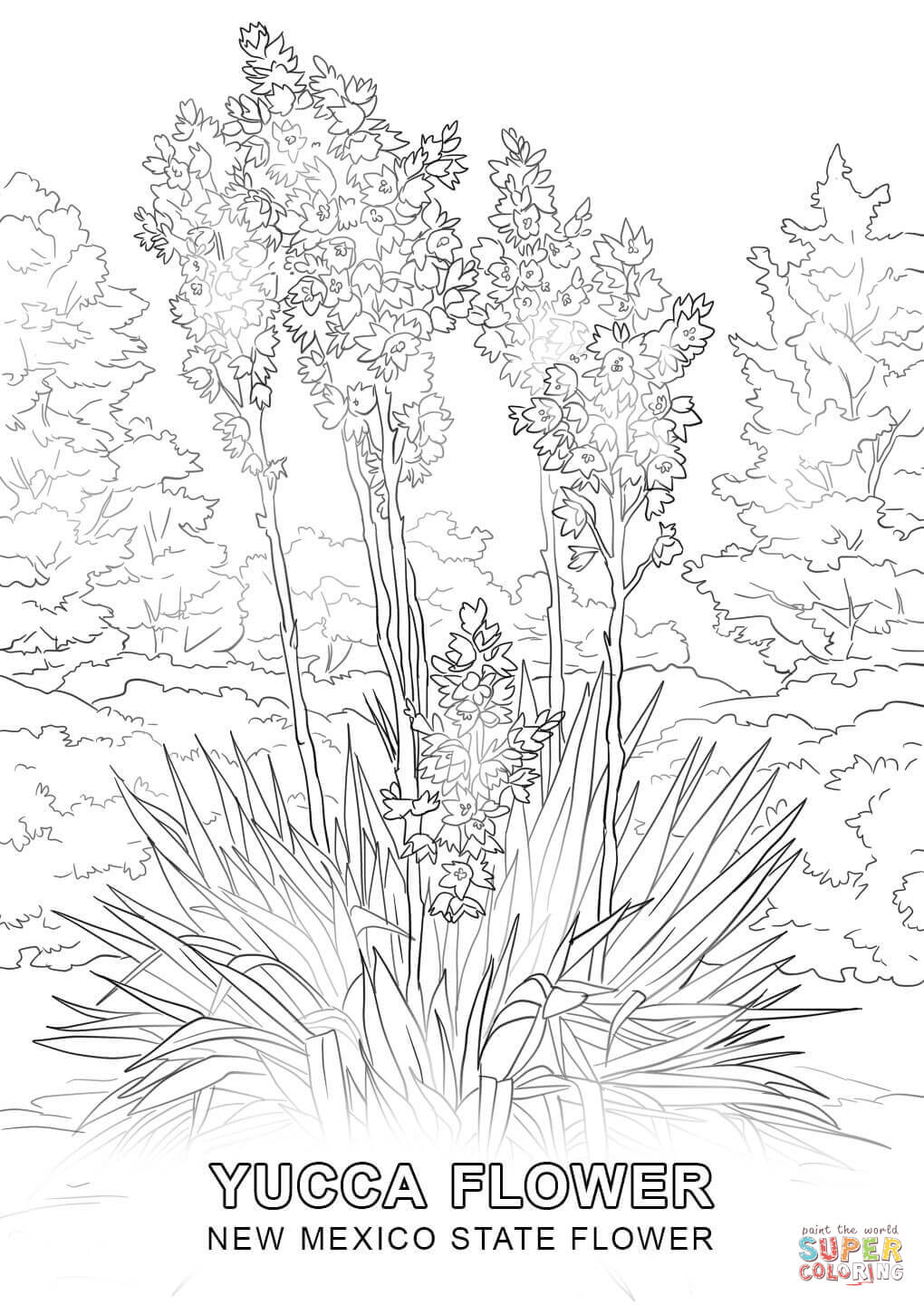 kentucky state flower new mexico state flower coloring page free printable kentucky flower state