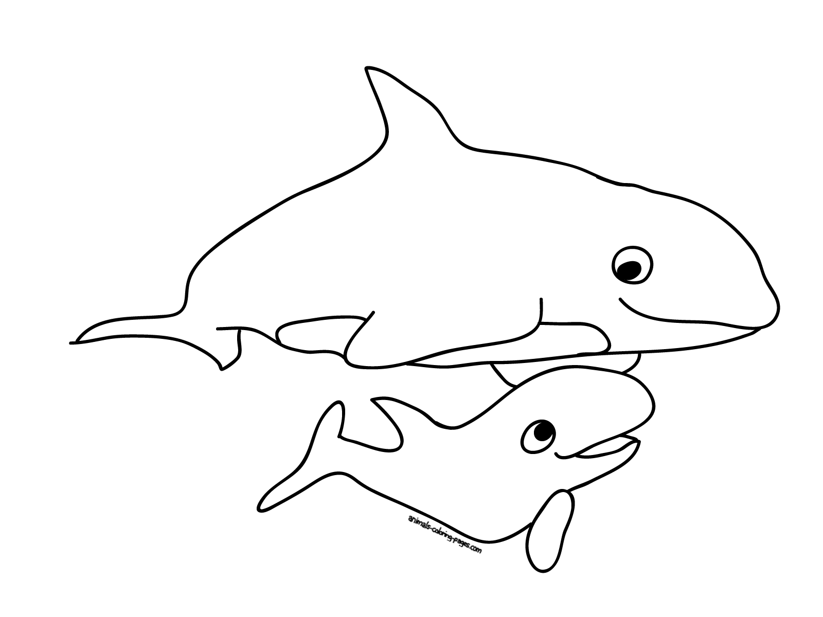 killer whale coloring page killer whale coloring page coloring killer whale page