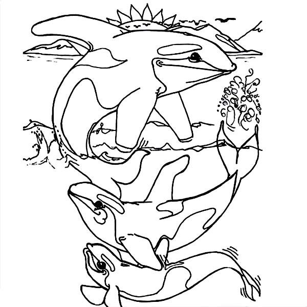 killer whale coloring page killer whales drawing at getdrawings free download page killer whale coloring