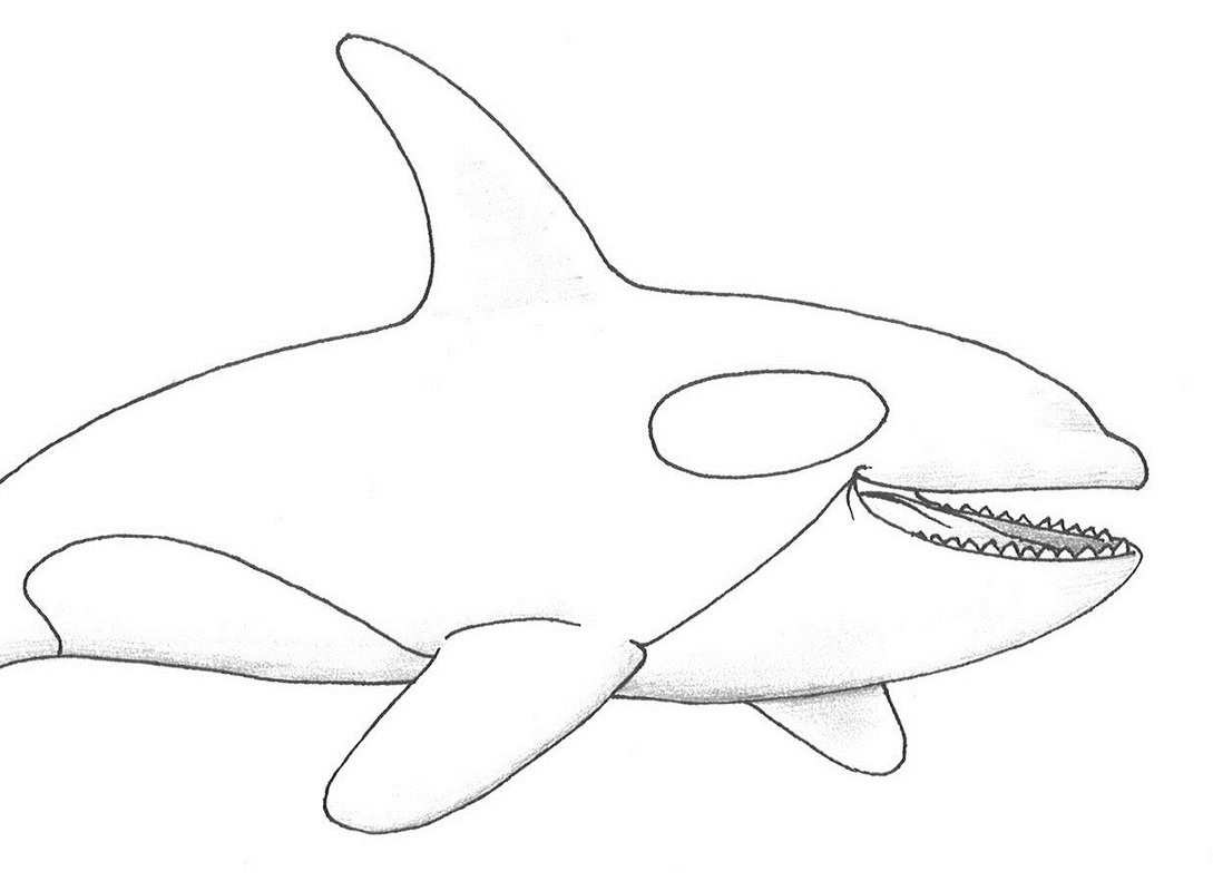 killer whale coloring page smiling killer whale coloring page netart killer whale page coloring