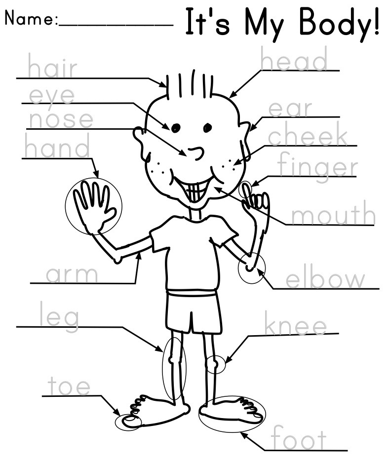 kindergarten body parts coloring body parts coloring pages coloring home body parts coloring kindergarten