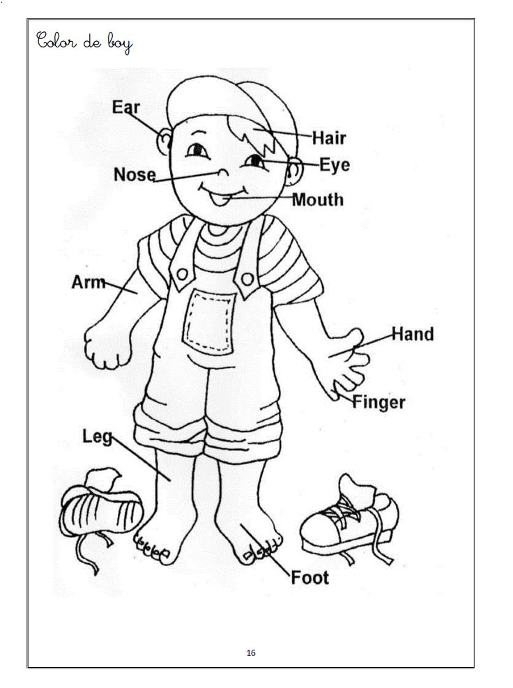 kindergarten body parts coloring dora39s body worksheet free esl printable worksheets made kindergarten body coloring parts