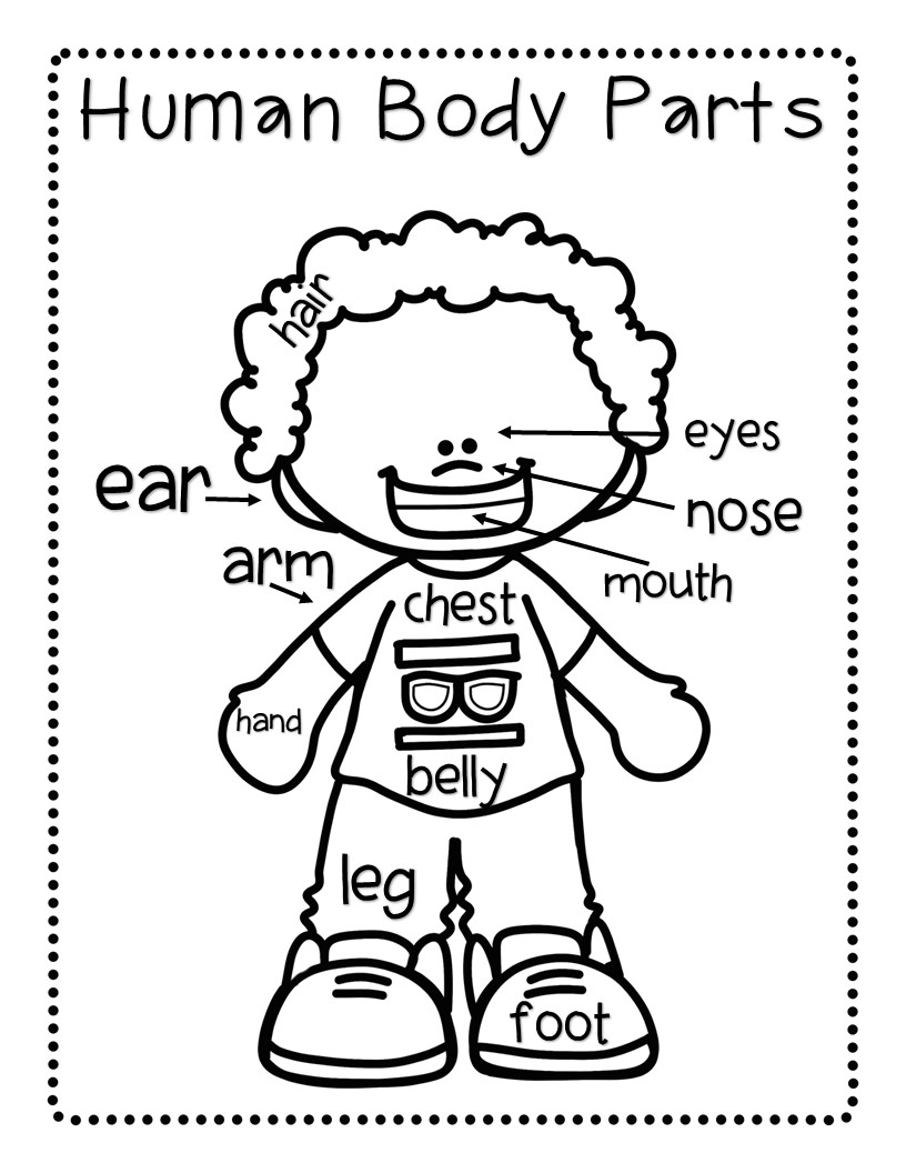 kindergarten body parts coloring pin on rules parts body kindergarten coloring