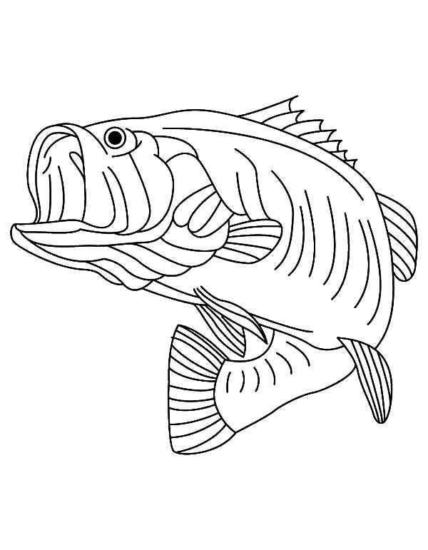 largemouth bass outline largemouth bass outline clipart best outline bass largemouth