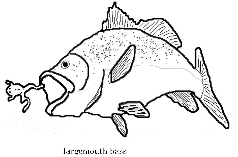 largemouth bass outline largemouth bass page coloring pages outline bass largemouth