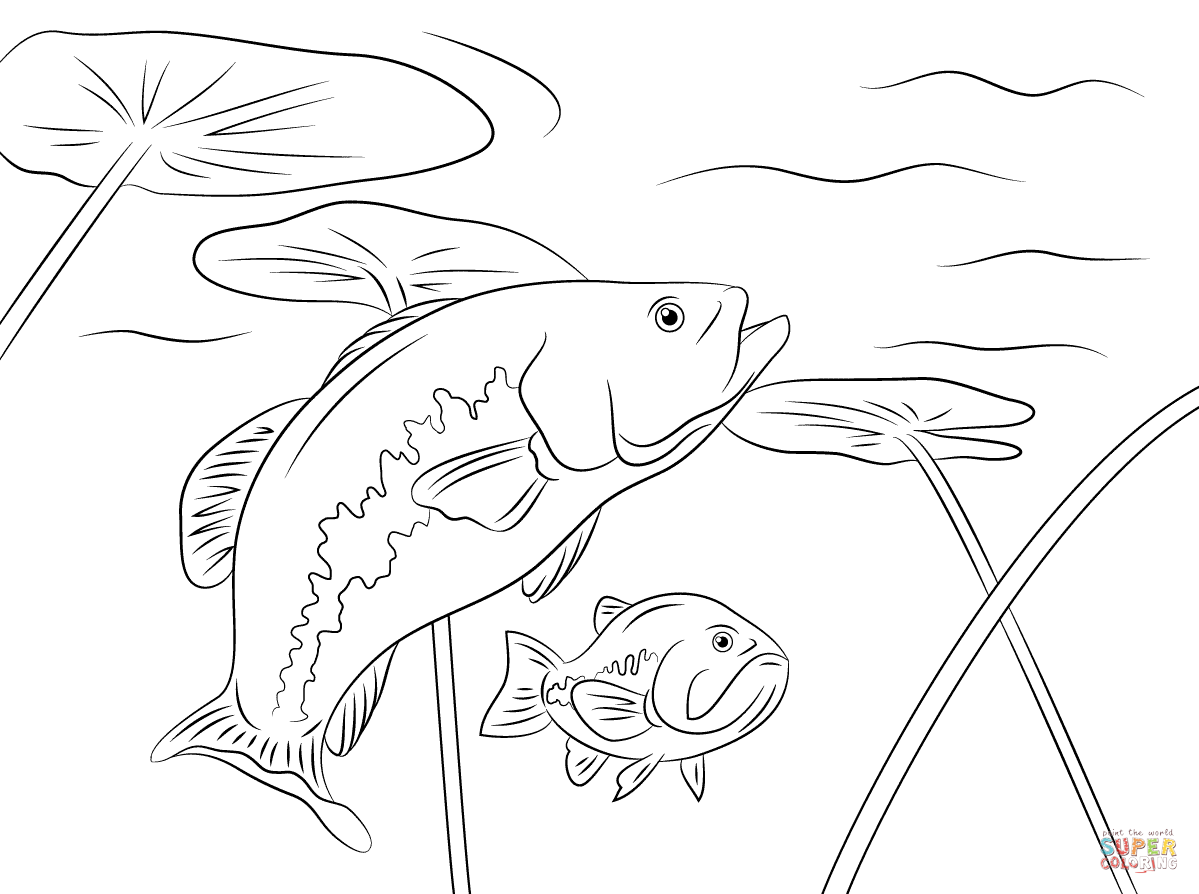 largemouth bass outline the best free bass drawing images download from 836 free outline bass largemouth