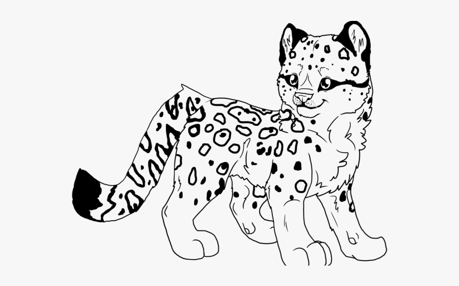 leopard pictures for kids baby snow leopard drawing at getdrawings free download leopard pictures for kids