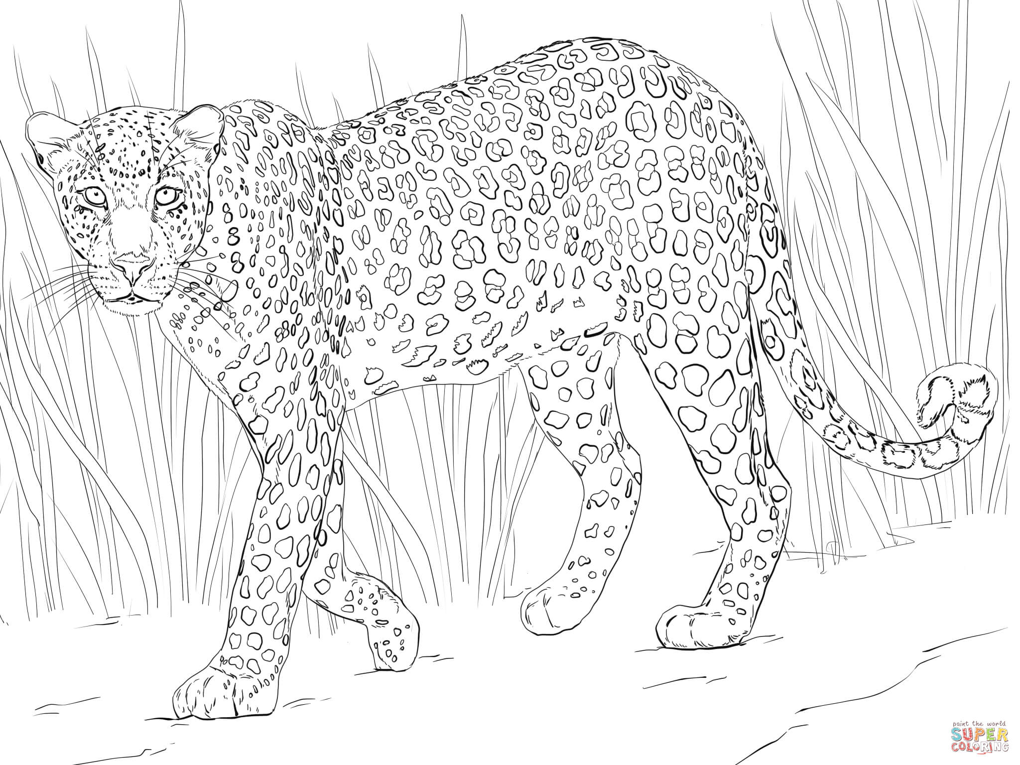 leopard pictures for kids free printable leopard coloring pages leopard coloring pictures for kids leopard
