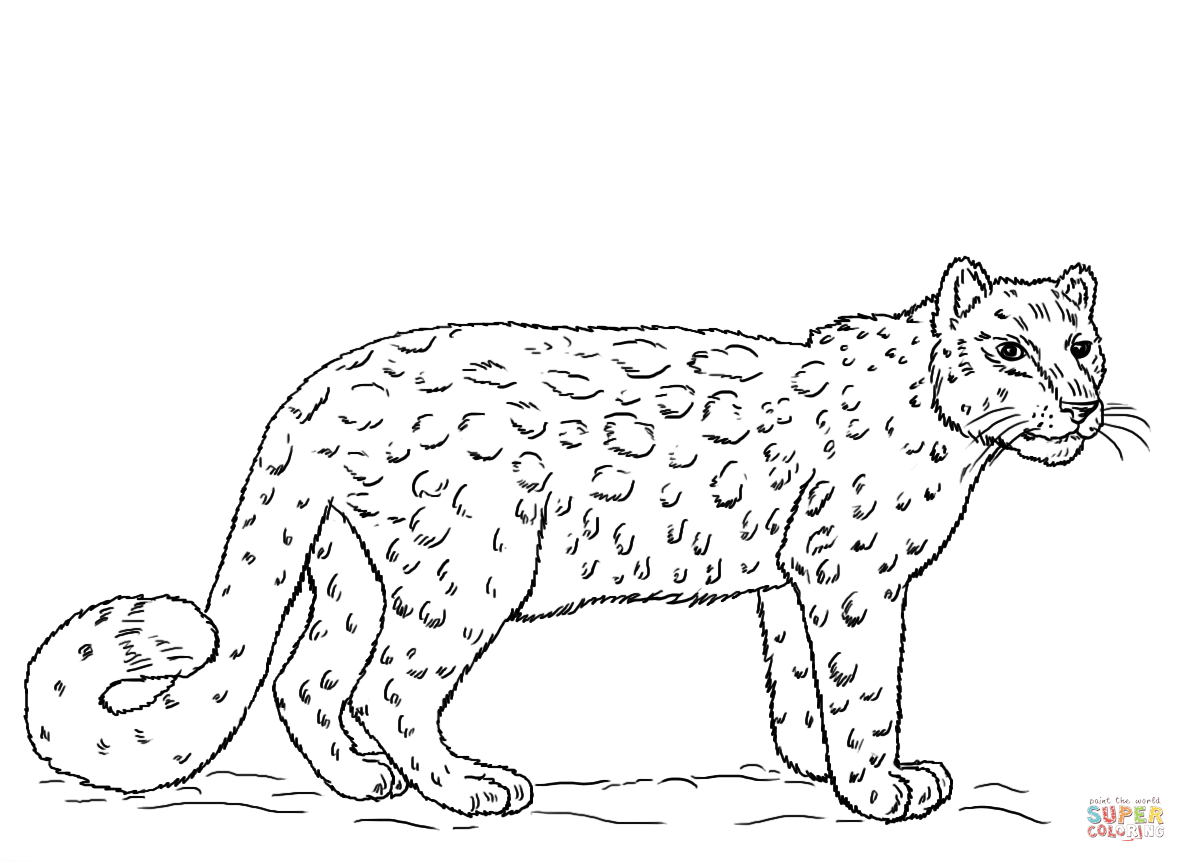 leopard pictures for kids leopard coloring pages coloring home pictures for leopard kids