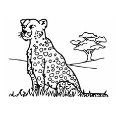 leopard pictures for kids nook leopard relaxing in a tree by keith connelly kids pictures for leopard