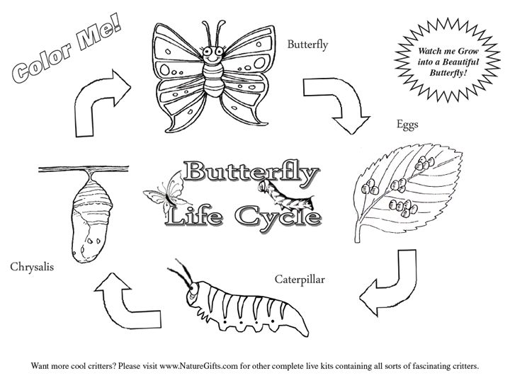 life cycle of a butterfly coloring page butterfly coloring pages print or download for free cycle of coloring page a life butterfly