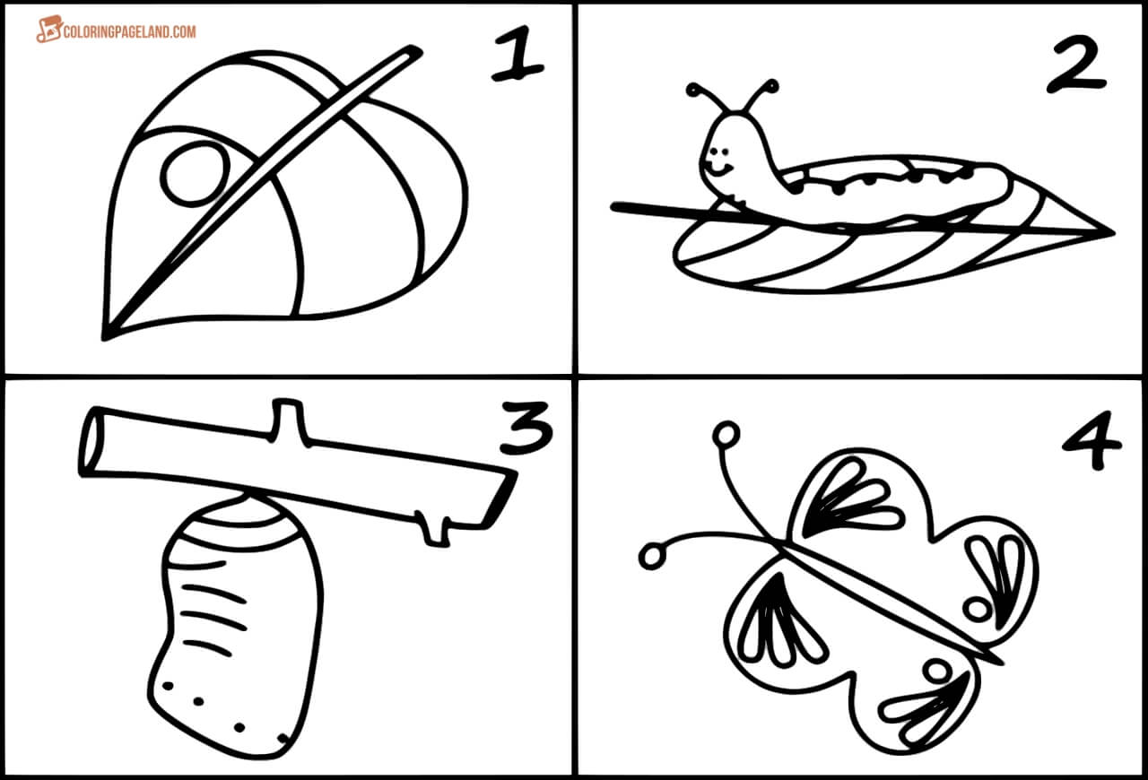 life cycle of a butterfly coloring page butterfly life cycle coloring page butterfly life cycle coloring of a page life cycle butterfly