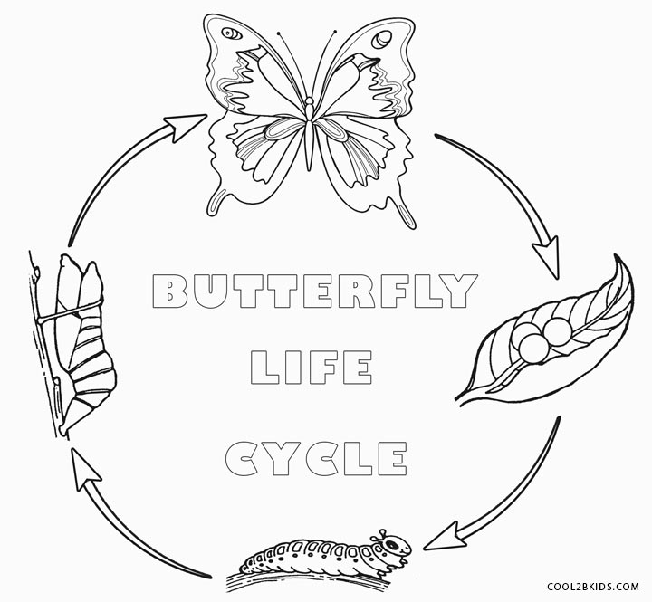 life cycle of a butterfly coloring page butterfly life cycle coloring page coloring page base life cycle a coloring page butterfly of