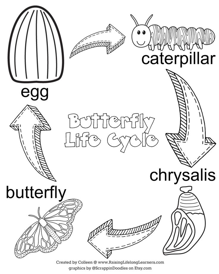 life cycle of a butterfly coloring page butterfly life cycle coloring page freshcoloringpagecom page coloring life a of butterfly cycle