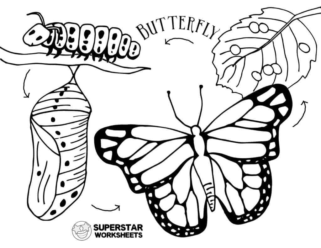 life cycle of a butterfly coloring page butterfly life cycle coloring page freshcoloringpagecom page coloring of a life cycle butterfly