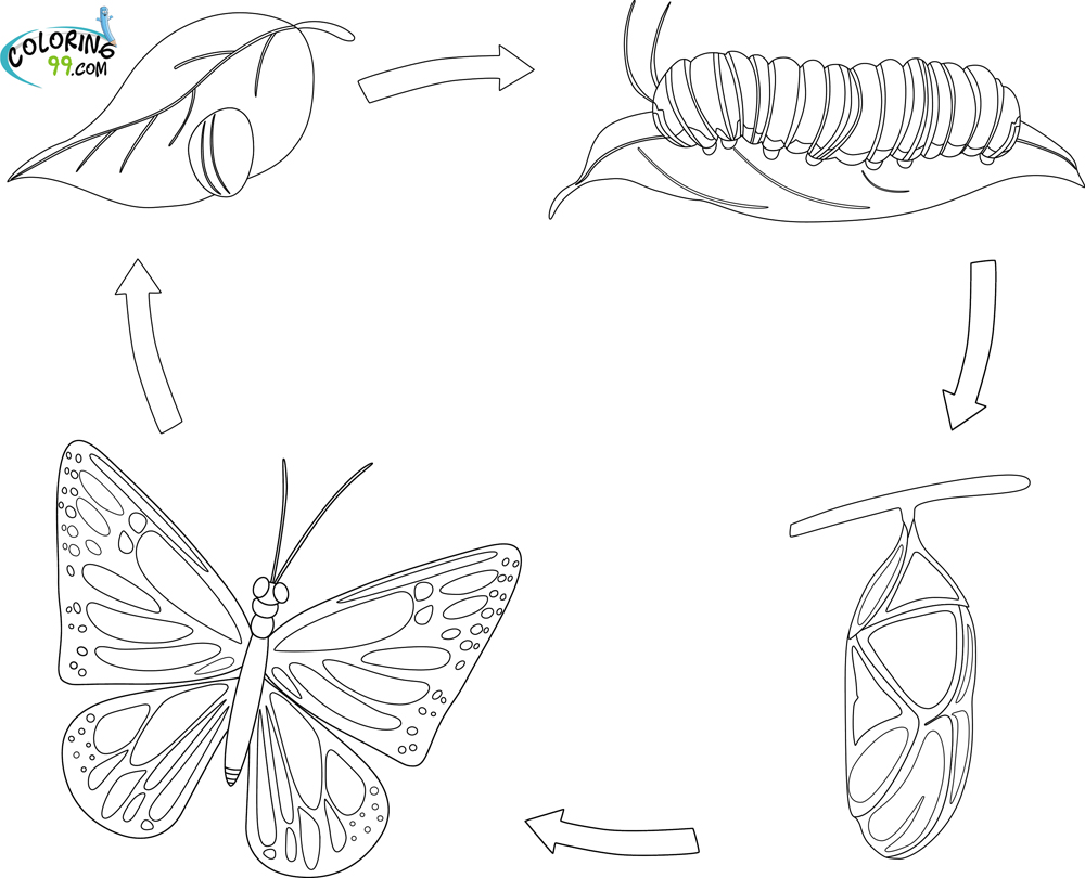 life cycle of a butterfly coloring page butterfly life cycle coloring pagejpg google drive page a coloring life butterfly of cycle