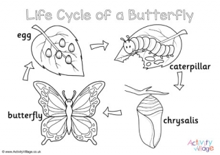 life cycle of a butterfly coloring page butterfly life cycle coloring pages for children coloring life cycle page of butterfly a