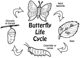 life cycle of a butterfly coloring page butterfly worksheets for kindergarten butterfly worksheets butterfly life a cycle page of coloring